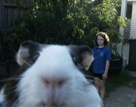 Забавные и смешные животные