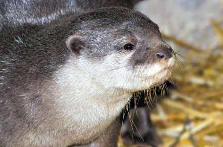 Выборы «Зоомистера-2012» в зоопарке Екатеринбурга