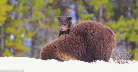 Медвежонок-наездник