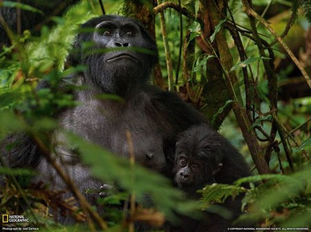 Лучшие фотографии февраля от National Geographic