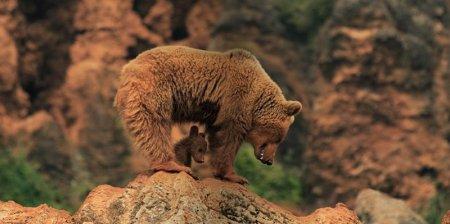 Дикая природа в фотографиях Marina Cano