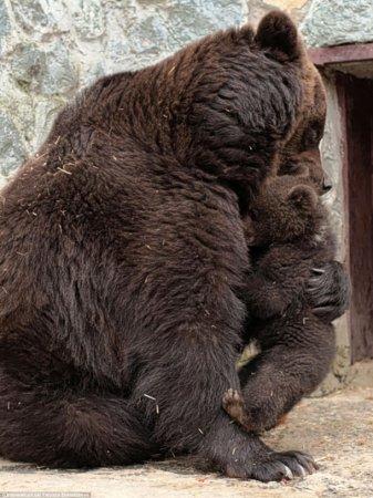Медведица решила воспитать медвежонка