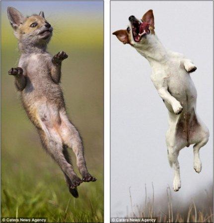 Удивительная дружба между лисёнком и собакой