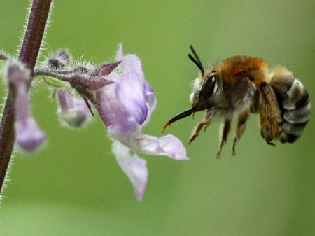 Личная жизнь насекомых