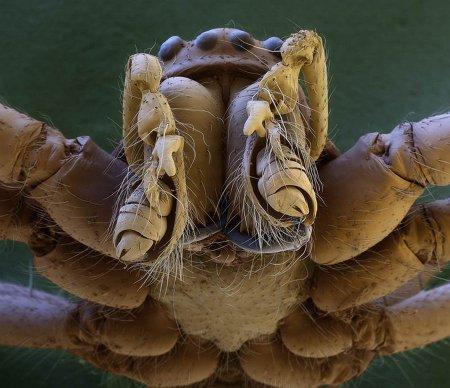 Насекомые под микроскопом