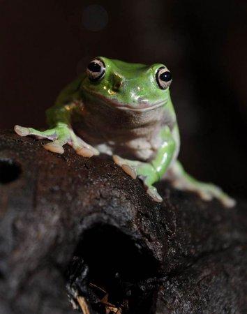Лучшие фотографии животных за неделю