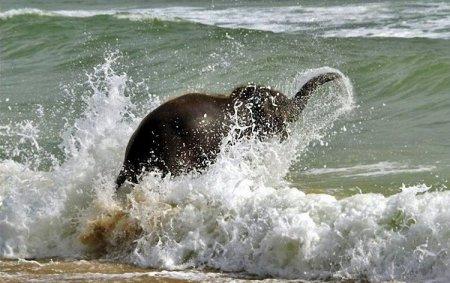Слонёнок на пляже