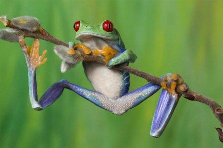 10 фактов о лягушках