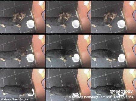 Покорми свою собаку через Twitter
