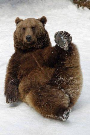 Зимние забавы баварских медведей