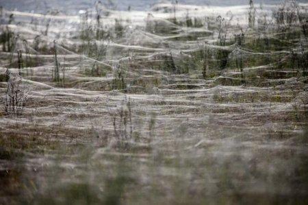 Австралийский городок переживает нашествие пауков