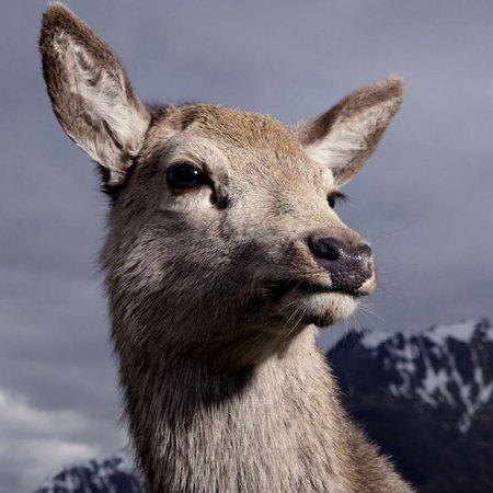 Благородные портреты животных