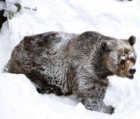 Пробуждение медведя