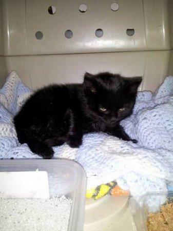 В Канаде спасли котенка, которого неизвестные пытались поджечь