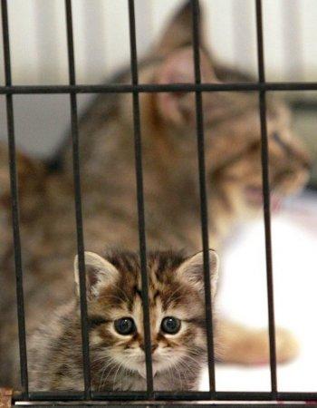 Котенок редкого вида родился у обычной кошки
