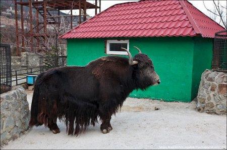 """Обитатели ялтинского зоопарка """"Сказка"""""""
