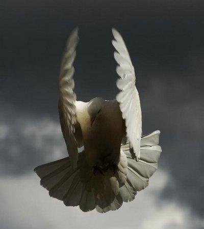 Грация полета