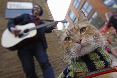 Кот Боб и уличный музыкант – история одной дружбы