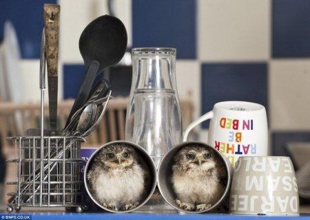 Осиротевшие совята нашли новый дом