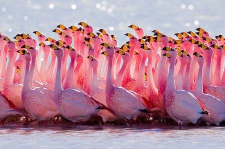 25 розовых обитателей планеты