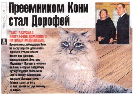 Потерялся кот Дмитрия Медведева