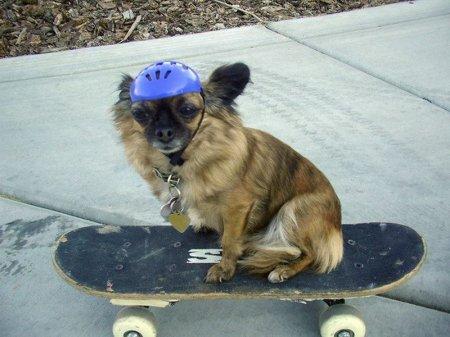 Забавные скейтбордисты