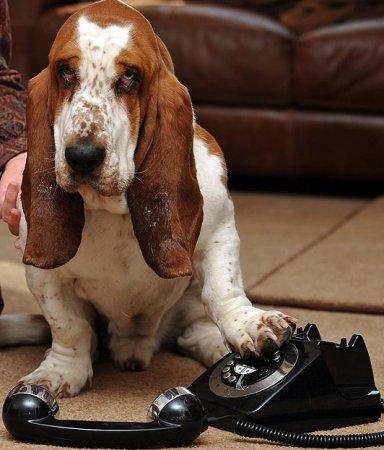 Задыхающийся пес сам вызвал себе спасателей