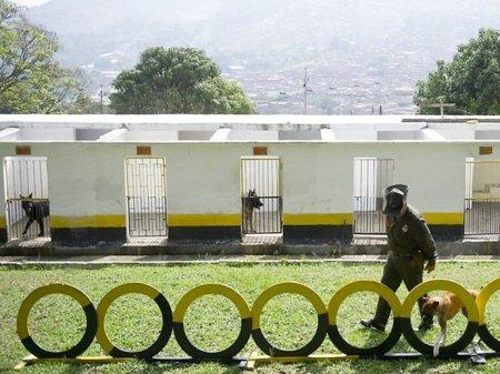 Тренировки полицейских собак в Колумбии