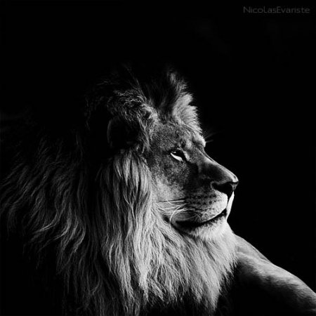Темный зоопарк Ника Эваристе
