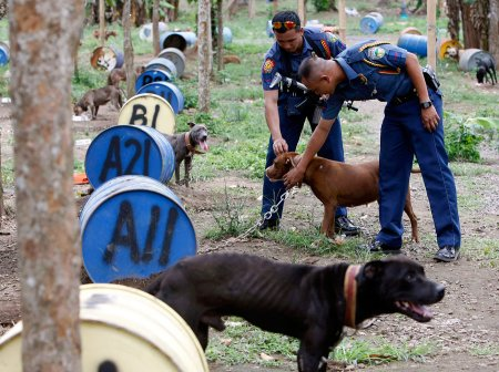 "Собачий ""концларегь"" на Филиппинах"