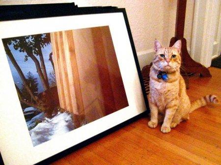 Кот-фотограф из Сиэтла