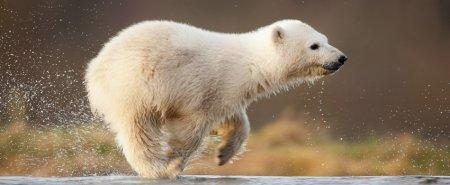 Медвежонок Сику радуется приходу весны