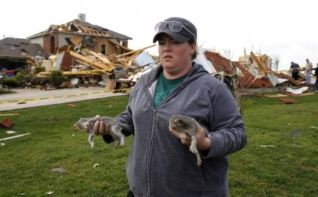 Из разрушенного торнадо дома спасли трех котят