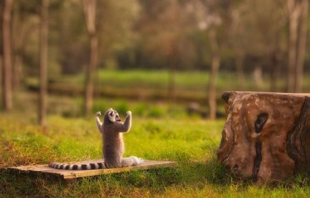 Забавные животные (28 фото)