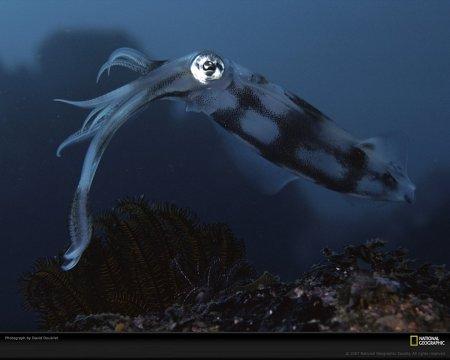 Удивительные обитатели подводного мира