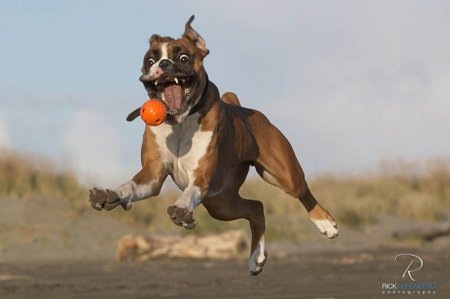 30 фотографий животных, сделанных в нужный момент