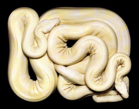 Новый взгляд на змей