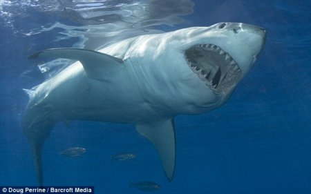 Пощекотать акулу