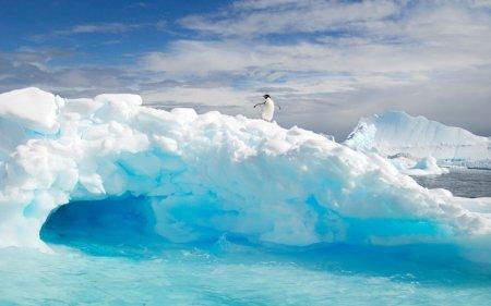 Пингвины в Антарктике