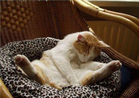 Коты, уснувшие в необычных позах