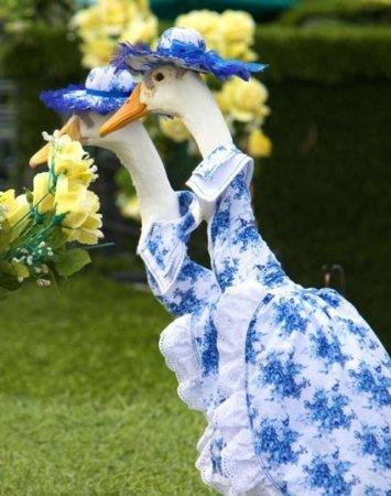 Гусиный показ мод в Австралии
