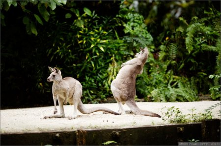 Самый открытый зоопарк мира