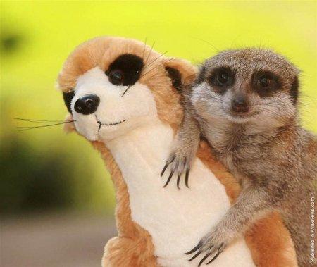Улыбающиеся животные (12 фото)