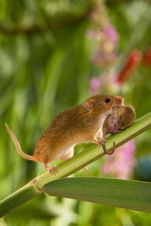 Тайная жизнь полевой мыши