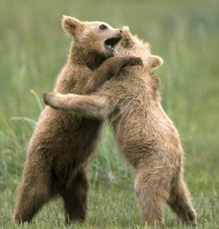 Семейные шалости медведей