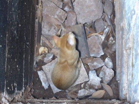 Любимое лакомство спасенного из ямы котенка - кукуруза