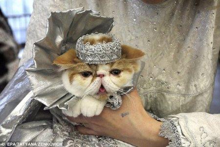 Показ кошачьей моды в Минске