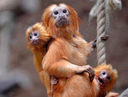 Лучшие фотографии животных за неделю (17 фото)