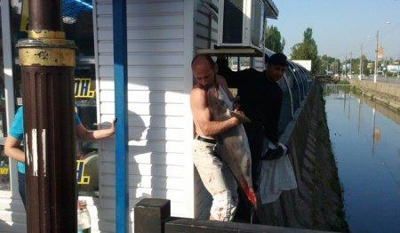 В Керчи местный житель спас дельфина