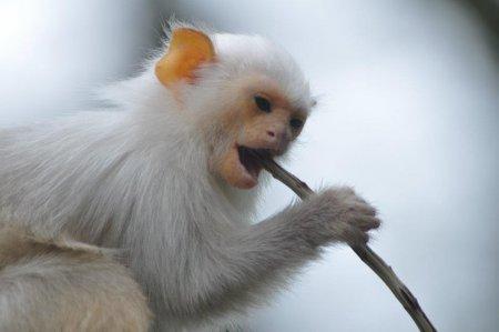 Серебристые мармозетки из зоопарка Англии